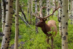 Tasco Trail Camera Review