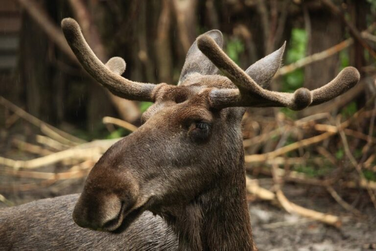 Moultrie Game Camera Review