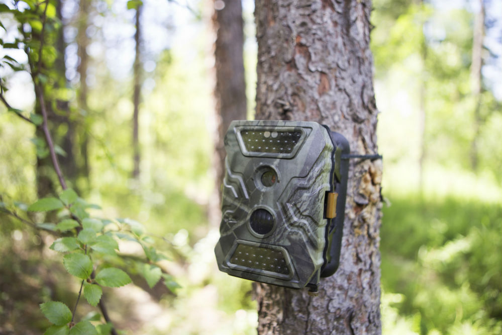 Best Trail Camera for Security: Become the Perfect Predator