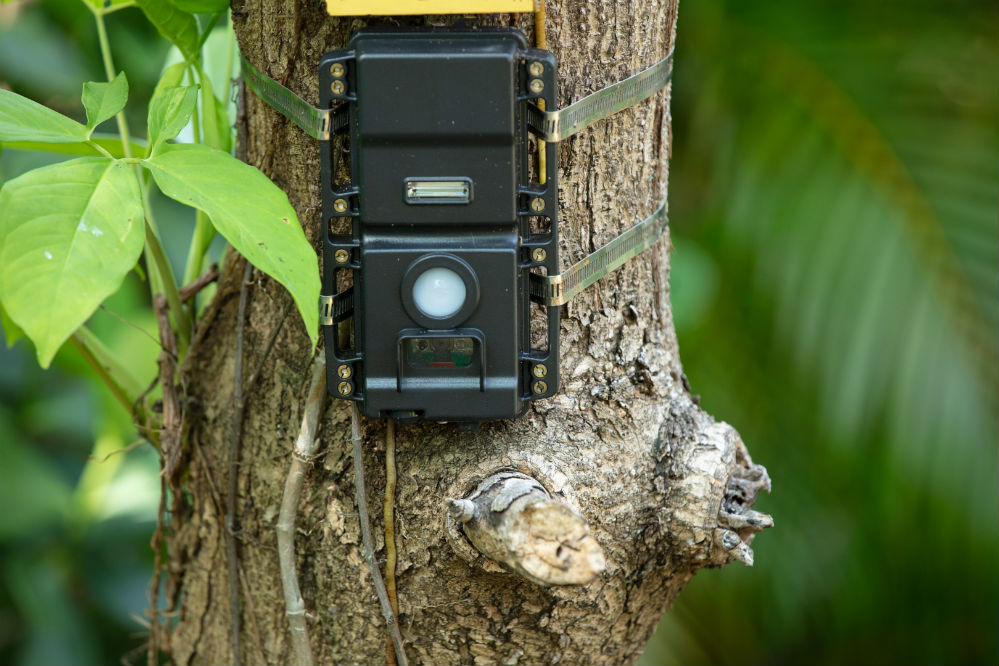 How to Hide a Trail Cam for Home Security: The 5 Best Ways
